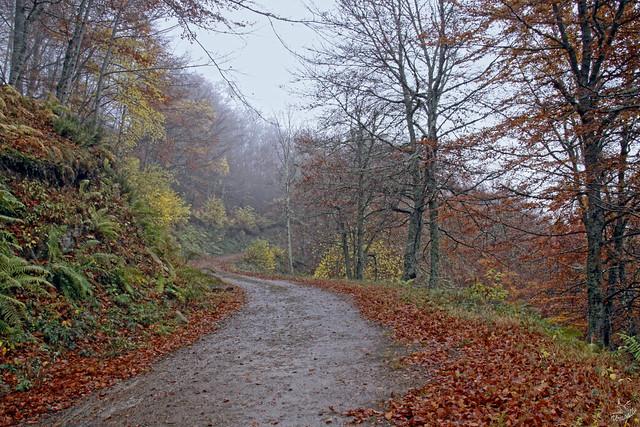 11 Un paseo por el otoño
