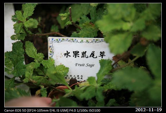 20121119_Flower45