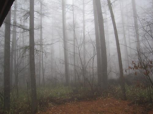 霧が立ち込めて・・2012.11.23 by Poran111
