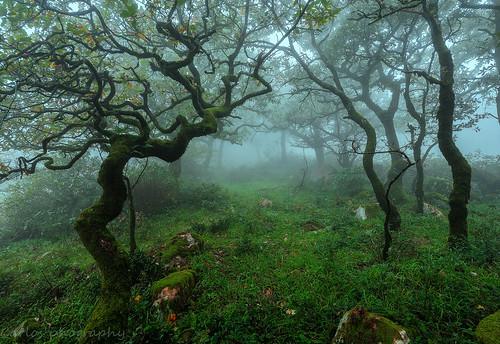 Formas en el bosque by carlos_d700