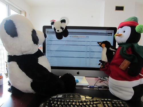 google panda google penguin