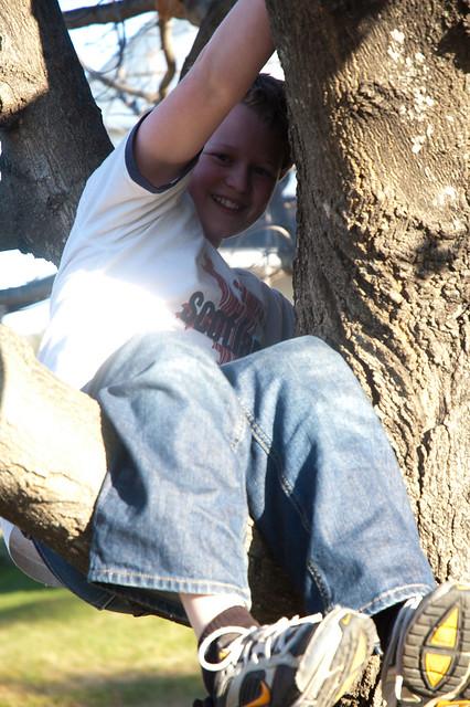 TreeClimbing