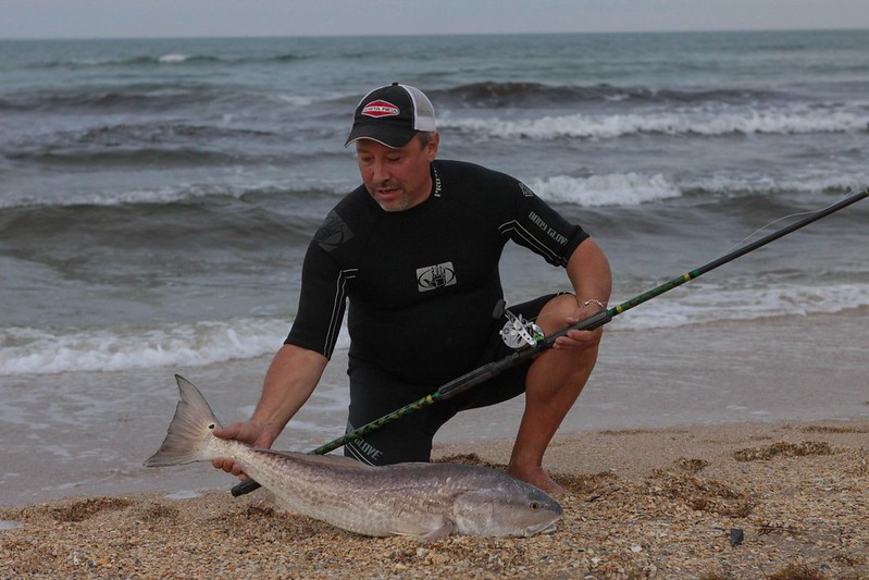 Reddrum bullreds channel bass drummin the surf in for South texas fishing