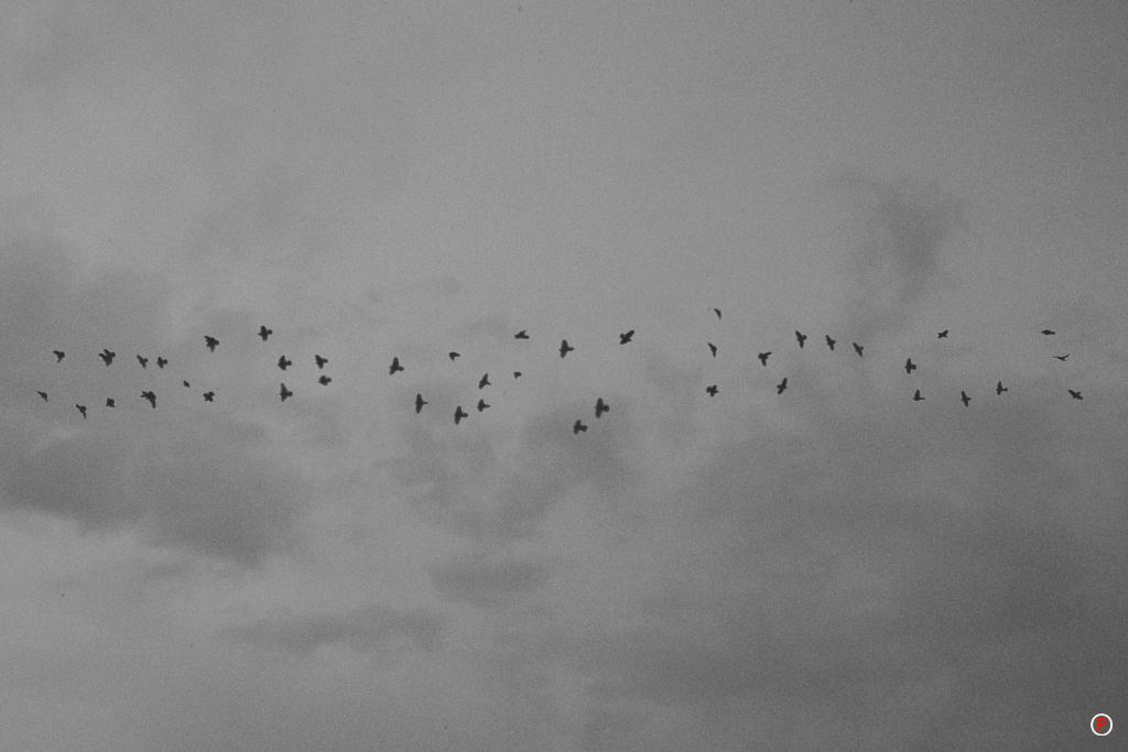 Rainy Day - Birdies
