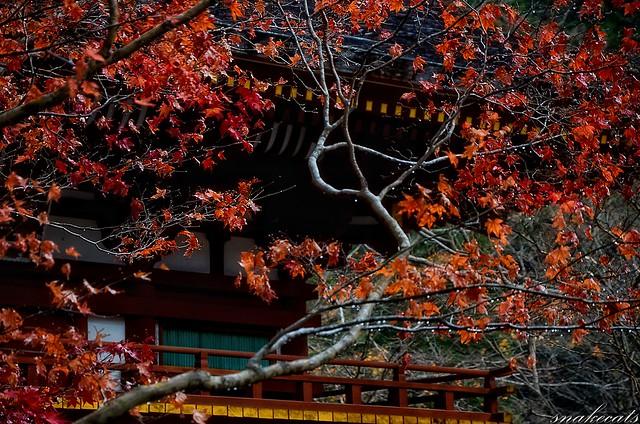 「濡れる紅葉」 室生寺 - 奈良