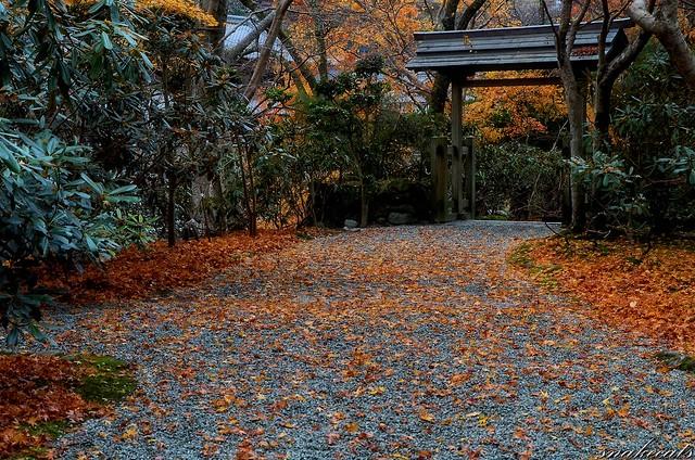 「落ち葉の道」 室生寺 - 奈良