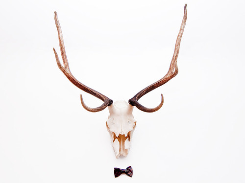 Bow tie Buck by petetaylor