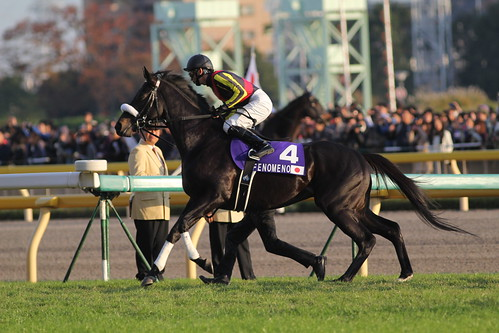 フェノーメノ 返し馬