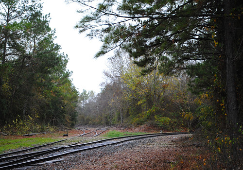 railroad autumn trees fall colors leaves train way san texas moscow camden tracks railway right row foliage augustine mcsa