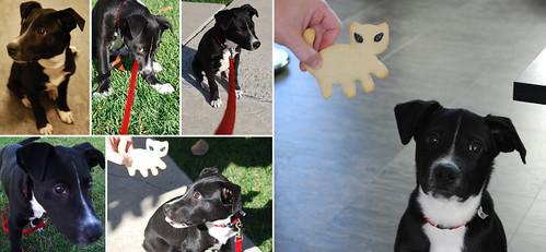 Dog composite