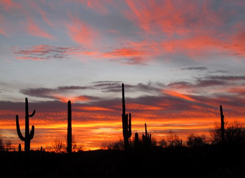 sunset arizona cactus sky southwest nature colors beauty silhouette clouds skyscape outdoors visions evening solitude peace desert sundown az adventure explore saguaro exploration discovery sonorandesert skyshow colorexplosion lookingwest saguarocactus maricopacounty carnegieagigantea azwsunset skyablaze zoniedude1 hieroglyphicmountains canonpowershotg11 earthnaturelife