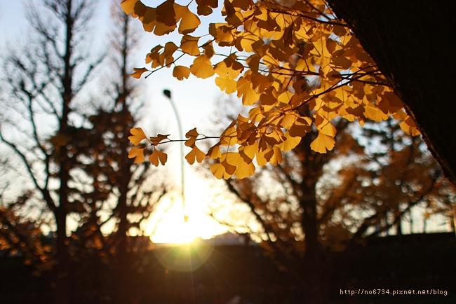 20121206_XmasTokyo_2844 f