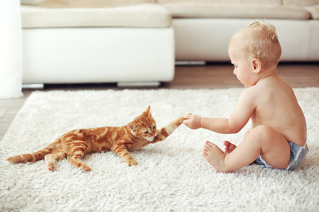 Toddler playing with red cat on a white carpet at home