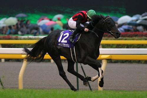 第146回天皇賞(秋)勝ち馬 エイシンフラッシュ(M.デムーロ)