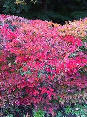 都立桜ヶ丘公園の紅葉