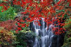 [Free Images] Nature, Forest, Waterfall, Autumn Leaf Color, Landscape - Japan, Maple ID:201211250600