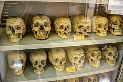 anthropology, ancient history, bone, skull,