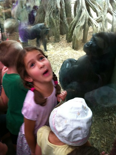 Bella at the zoo