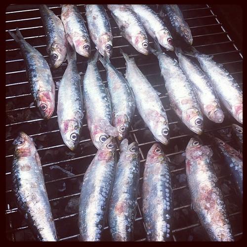 vamos con las sardinas!