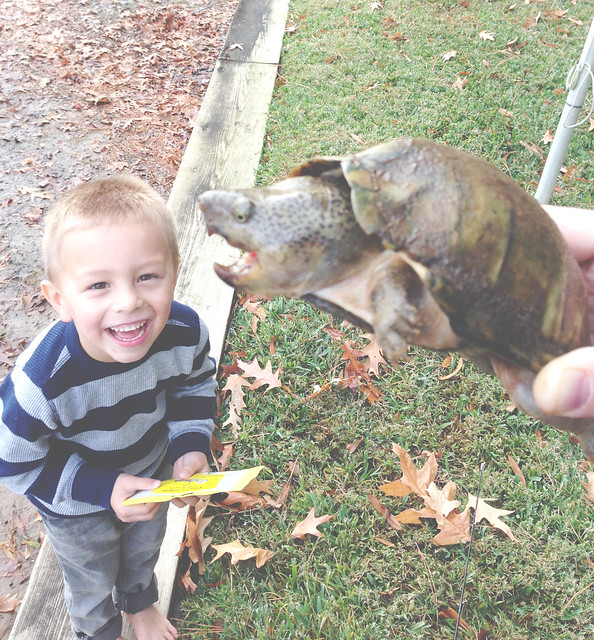 ben and the turtle
