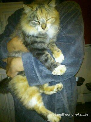 Thu, Nov 29th, 2012 Found Female Cat - Fox Hall, Co. Longford