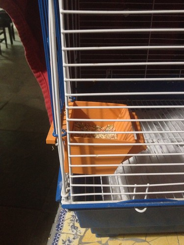 Bird Cage Feeder
