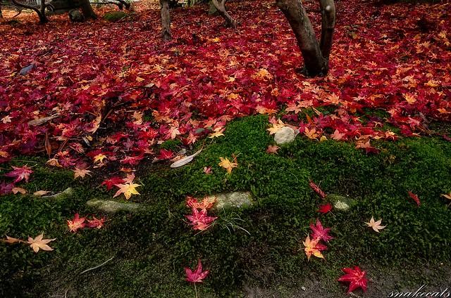 「降り積もる紅葉」 室生寺 - 奈良