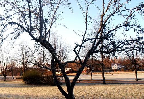 Frozen Ingesund