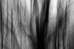 [フリー画像素材] 自然風景, 森林, 樹木, モノクロ ID:201212091600