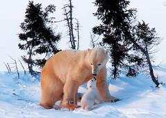 媽媽與小熊甜蜜親吻