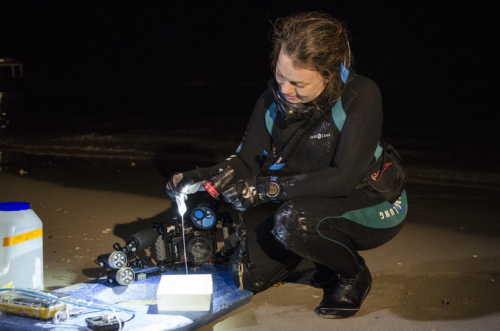 <p>University of Hawaii at Manoa Assistant Research Professor Angel Yanagihara collects box jellyfish specimen. Photo credit: University of Hawaii</p>