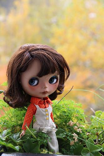 Printemps, été, automne ... et mise à jour avant l'hiver p14 - Page 7 8271168494_00bb3206db
