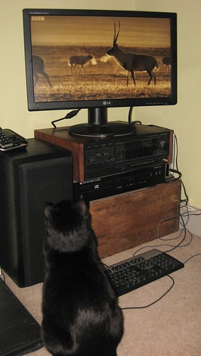 Cat entertainment centre