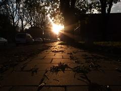sidewalk sunset
