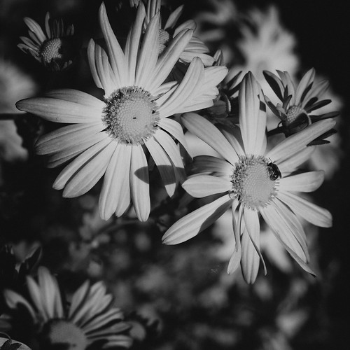 Monochrome Flowers by laguglio