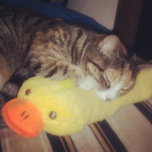 The duck of kitteh love.