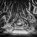 The Dark Hedges by mibreit