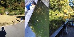 菅刈公園の庭園にて (2012/11/10)