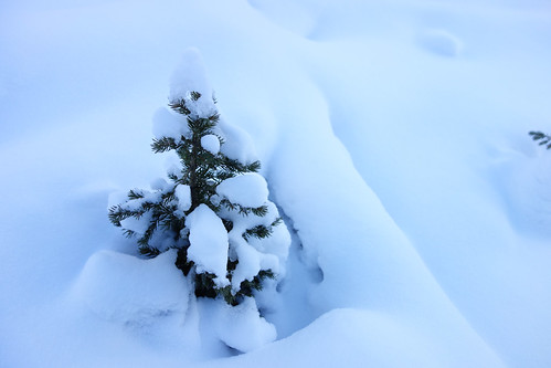 Snowshoeing Rummel Lake-3