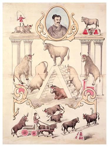 003-Circo Price- cuatro toros amaestrados-1884-Copyright Biblioteca Nacional de España