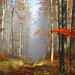 Foggy forest by RainerSchuetz