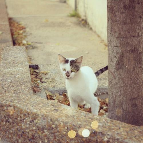 #picfx #cats #streetcat #autumn
