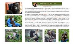 Gorillas: Senkwekwe Center