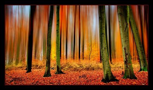 Herbstliche Farbenspielerei.
