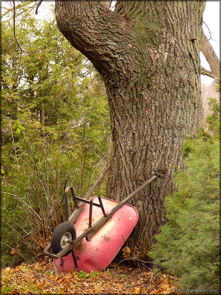 P1290258_broadway_tree