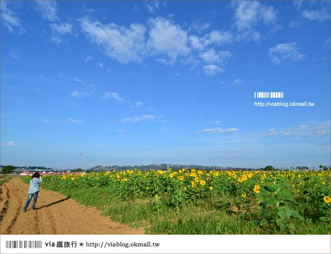【新社花海2012】2012新社花海節活動介紹及交通資訊8-12
