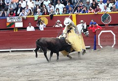 animal sports, rodeo, cattle-like mammal, western riding, bull, event, equestrian sport, tradition, sports, bullring, entertainment, performance, bullfighting,