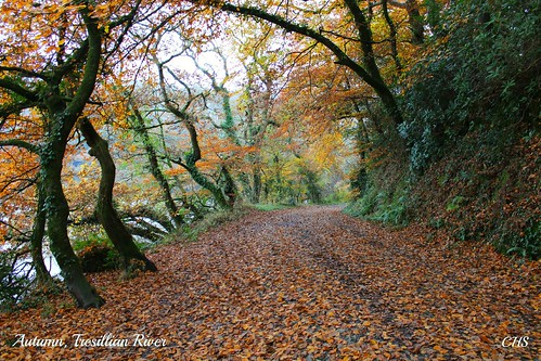 Autumn, Tresillian River - November 2012 by Stocker Images