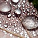 Small photo of After rain