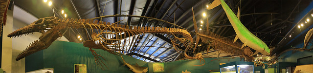Ancient Sea Panorama at the Rocky Mountain Dinosaur Resource Center, Woodland Park, CO